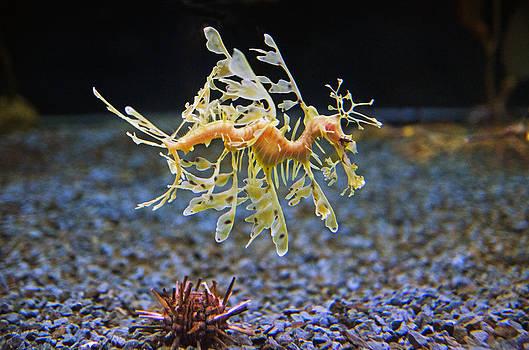 Sea Dragom by Cheryl Cencich