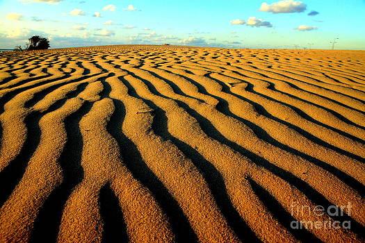 Sea Dune by Arie Arik Chen