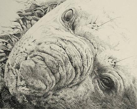 Sea Elephant by Grizelda Cockwell