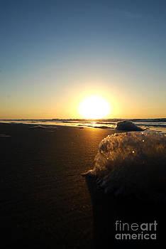 Sea Foam by Linda Mesibov