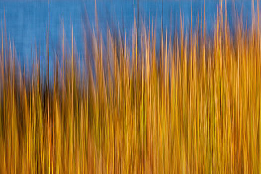 Sea Grass by Rebecca Skinner