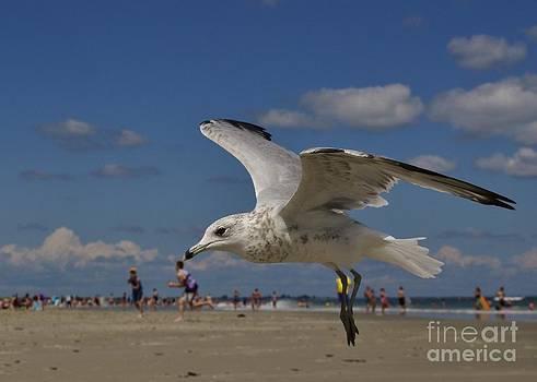 Joy Bradley - Sea Gull Fun