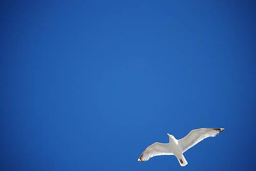 Joy Bradley - Sea Gull