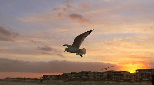 Sea Gulls at Sunset 1 by Kay Mathews