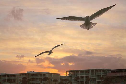 Sea Gulls at Sunset 2 by Kay Mathews