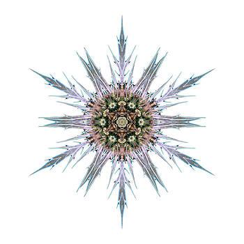 Sea Holly I Flower Mandala White by David J Bookbinder