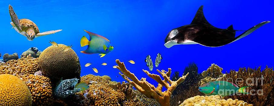Sea Life Panorama by Isabelle Kuehn