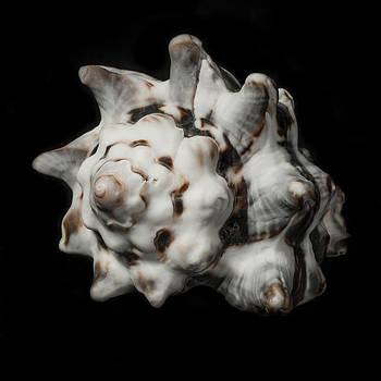 Sea Shell #2 by Marinus En Charlotte