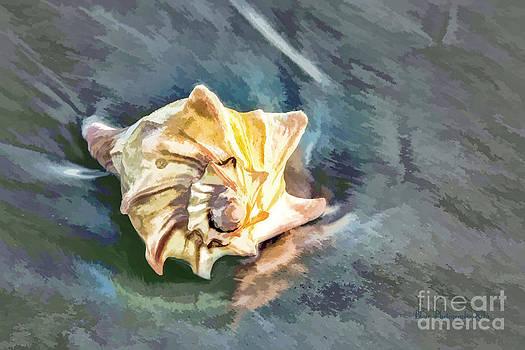 Sea Shell by the Sea Shore by Linda Blair