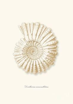 Sea shell white french vintage by Patruschka Hetterschij
