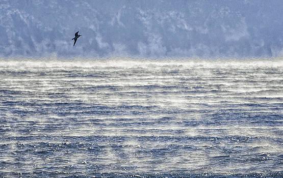Sea Smoke and Gull Blues by Marty Saccone