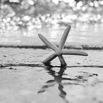 Sea Star BW by Laura Fasulo