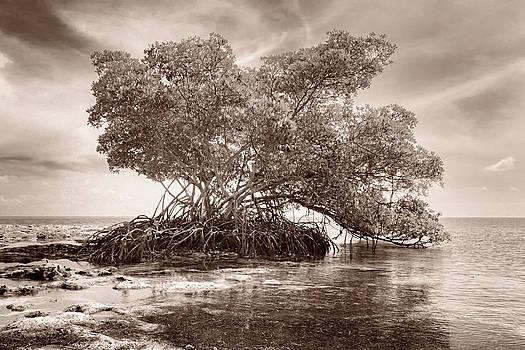 Sea to Sky by Hali Sowle