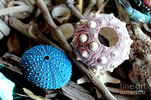 Sea Urchin Duo by Cynthia Snyder