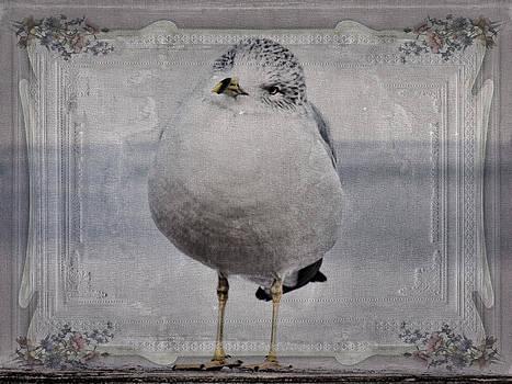 Pamela Phelps - Seagull Affirmations