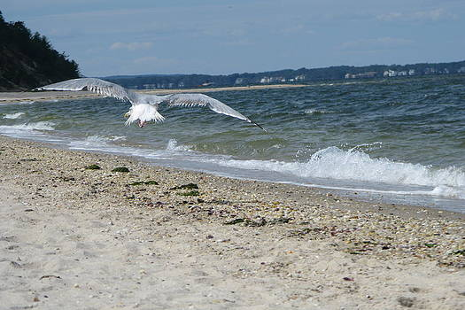 Seagull by Barbara Ferreira