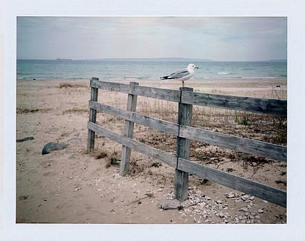 Seagull by Brady D Hebert