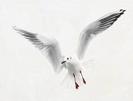 Seagull Flight  by Lisa Cockrell