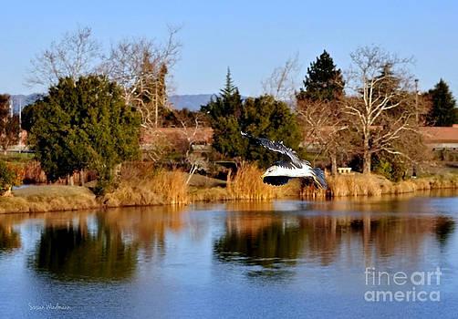 Susan Wiedmann - Seagull Gliding Over Lake