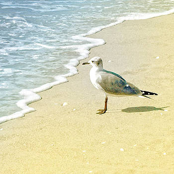 Seagull by Karen Lynch
