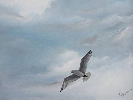 Seagull by Linda Koch