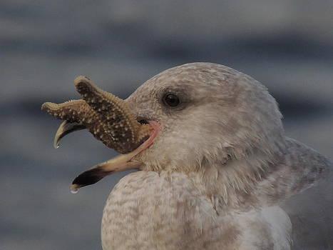 Seagull Series by Keith Rautio