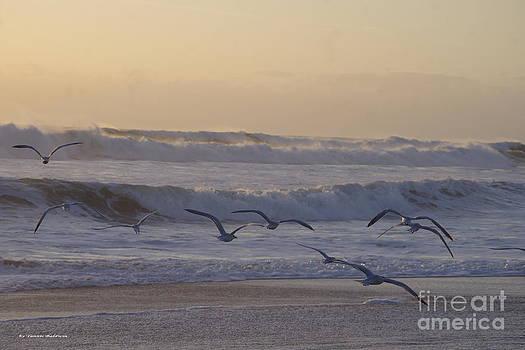 Tannis  Baldwin - Seagull sunrise