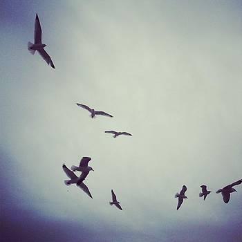 Seagull Swirl by Anastasia Pleasant