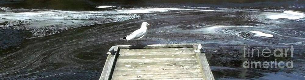 Gail Matthews - Seagull views water currents