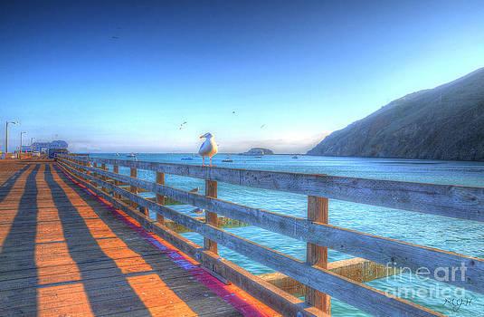 Seagulls and Ocean by Matthew Hesser