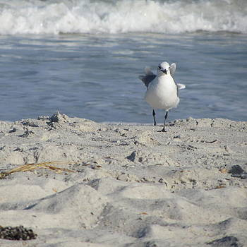 Seagulls at Fernandina 4 by Cathy Lindsey