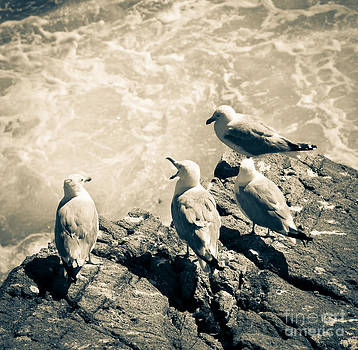 Seagulls by Isabel Poulin