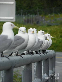 Seagulls by Jennifer Kimberly