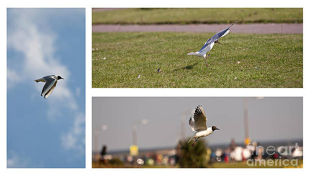 Seagulls by Lesley Rigg