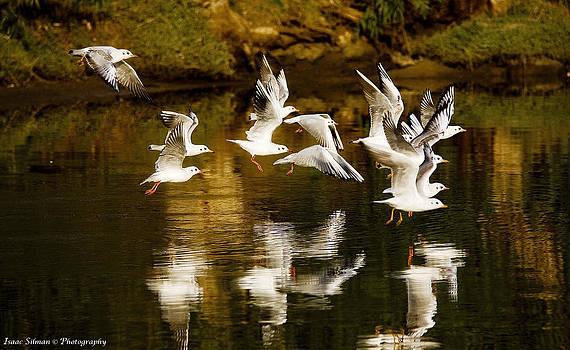 Isaac Silman - Seagulls  Liftoff