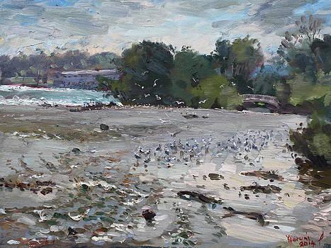 Ylli Haruni - Seagulls on Niagara River
