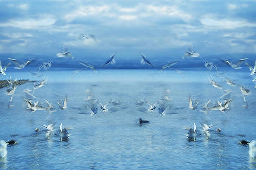Seagulls by Silke Magino