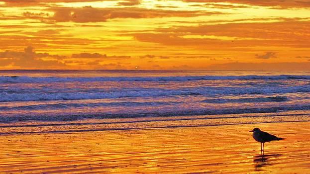 Seagull's Sunrise Solitude by DM Photography- Dan Mongosa