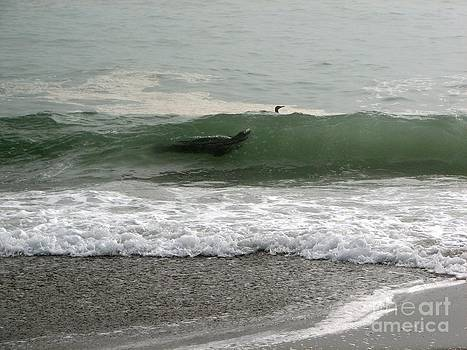 Seal In A Wave by Matt James