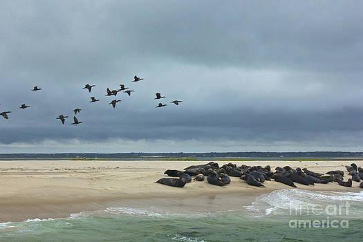 Amazing Jules - Seals and Sea Birds