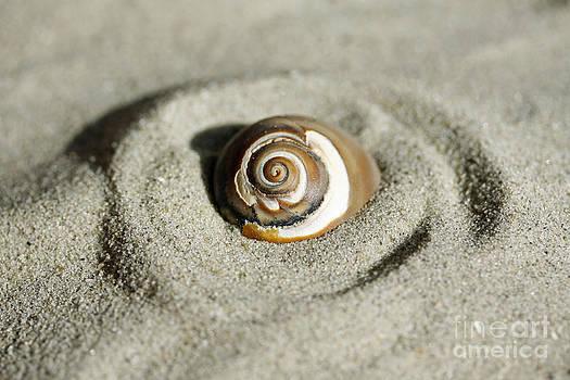 Seashell Swirl by Denise Pohl