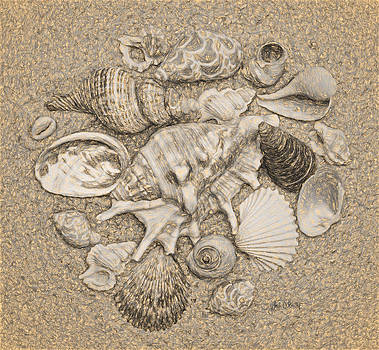 Sandi OReilly - Seashells Collection Drawing