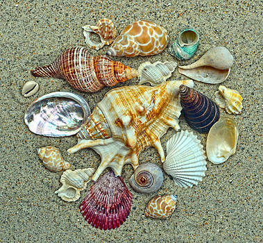 Seashells Collection by Sandi OReilly