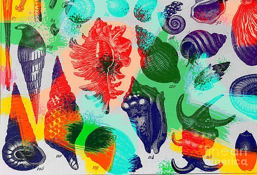 Dennis D Potokar - Seashells