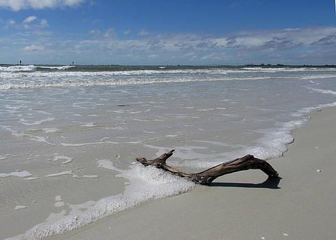 Seashore Driftwood by Rosie Brown