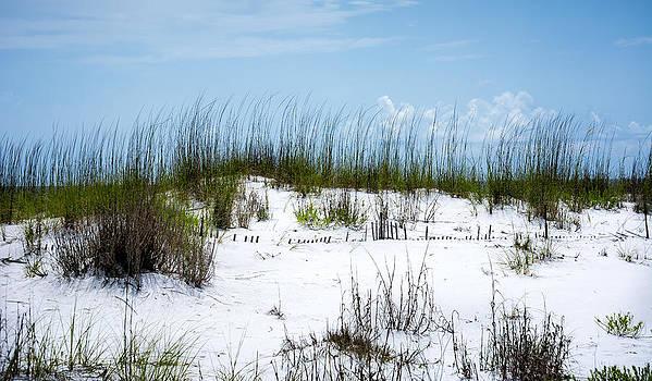 David Morefield - Seaside Fenceline