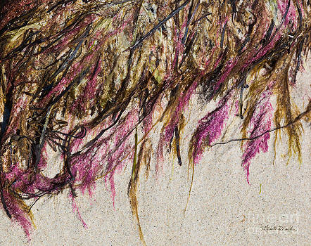 Michelle Wiarda - Seaside Tapestry
