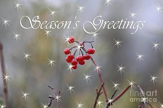 Cathy  Beharriell - Seasons Greetings Red Berries