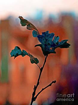 Gwyn Newcombe - Seasons of Emotion