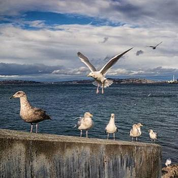 #seattle #rx1 #seagulls by Ron Greer